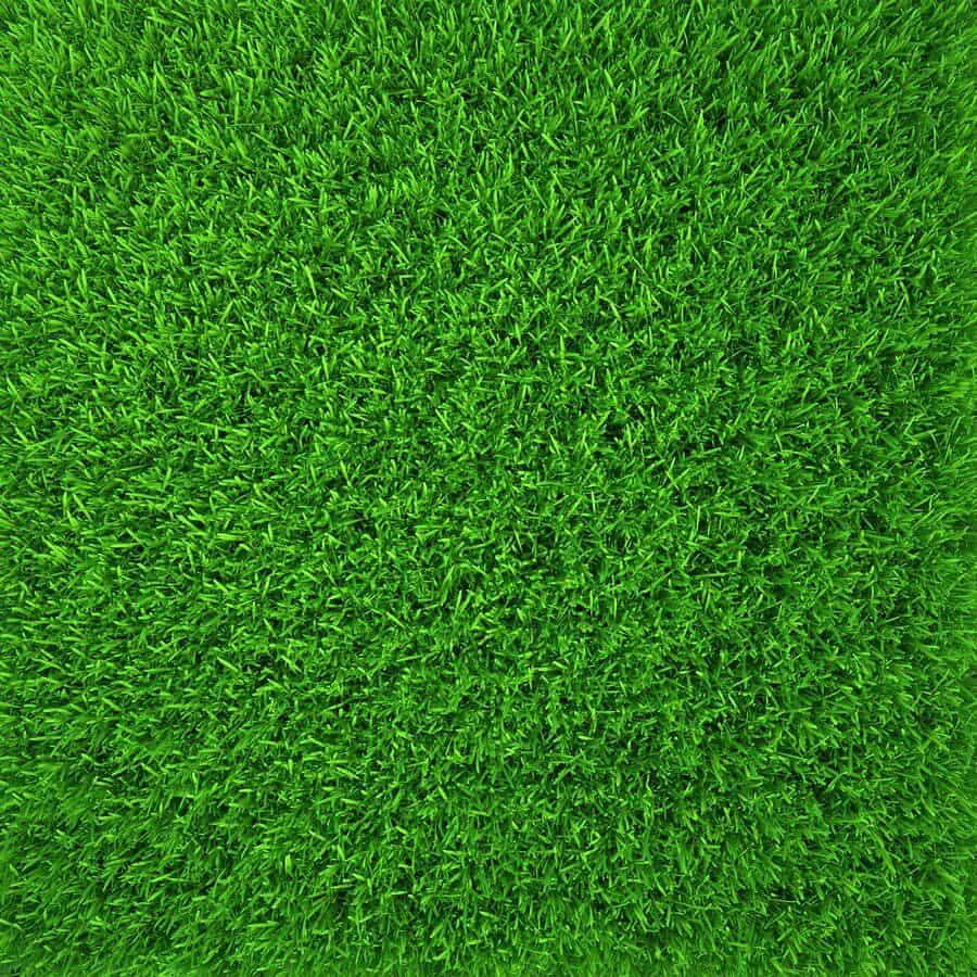 Emerald Lawns Austin